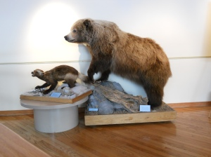 Grizzly and wolverine