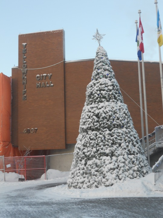 Yellowknife City Hall Christmas tree