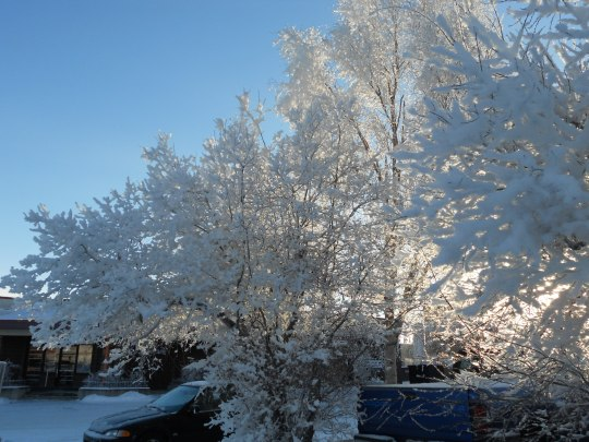 Hoarfrost and snow