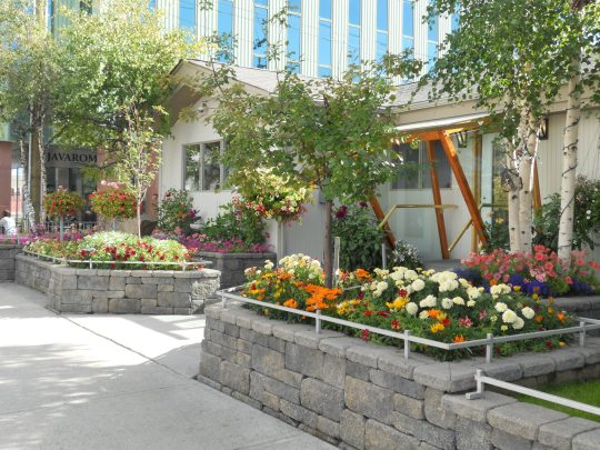Adam Dental Clinic flower garden